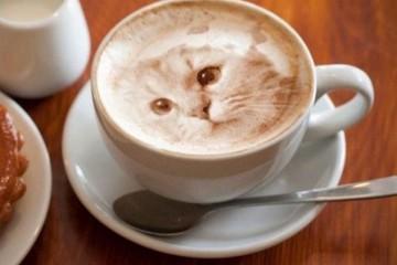 kávé4