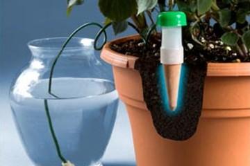 növények öntözése3