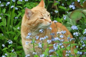 macska virágokkal