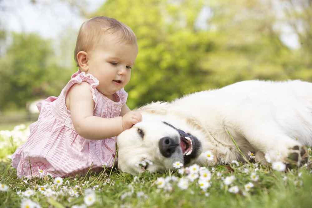 kisbaba és kisállatok